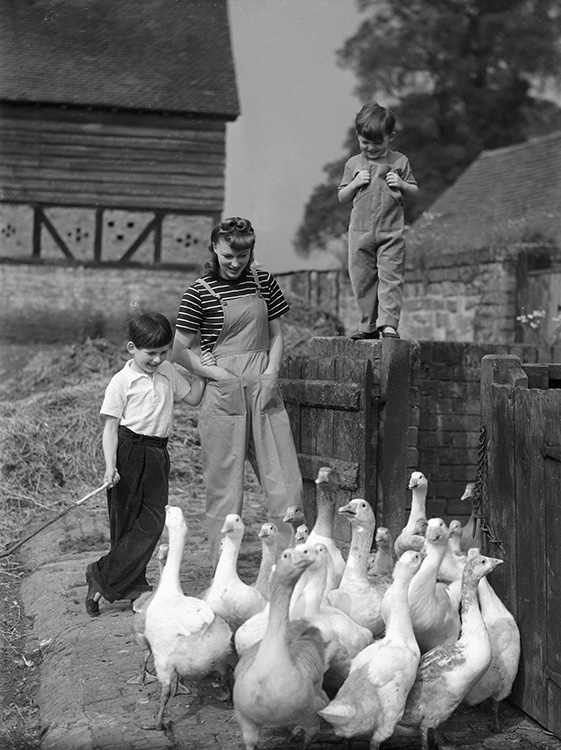 The Freedom of the Farm